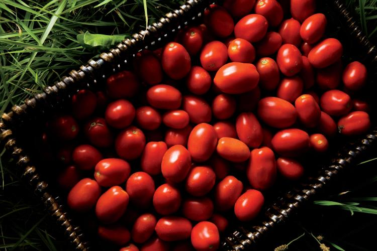 Red Gold Tomatoes Roma Indiana