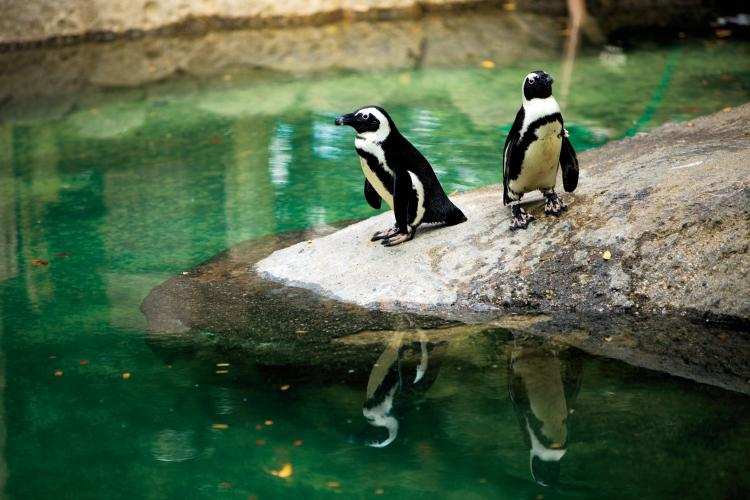 Penguins at Fort Wayne Children's Zoo