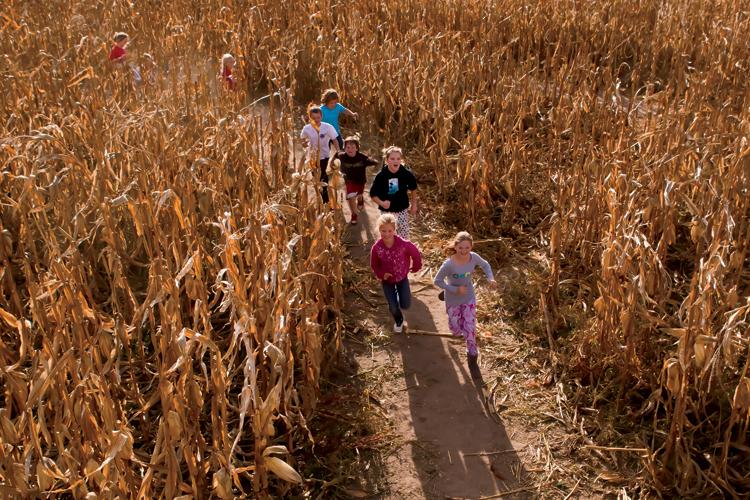 Guse Corn Maze