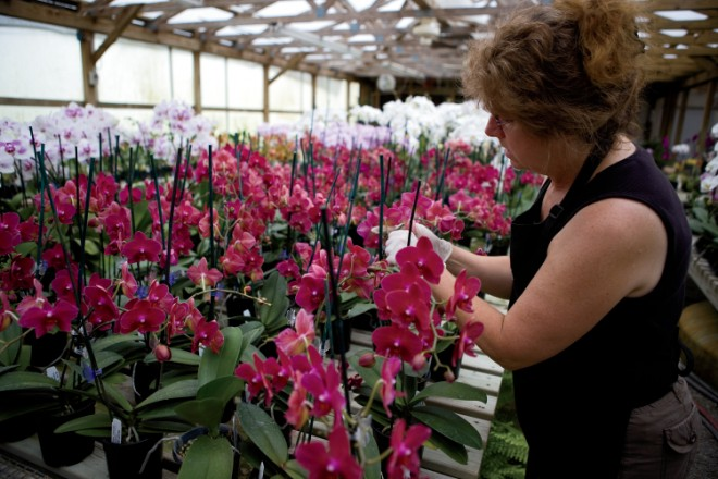 Hilltop Orchids in Cloverdale