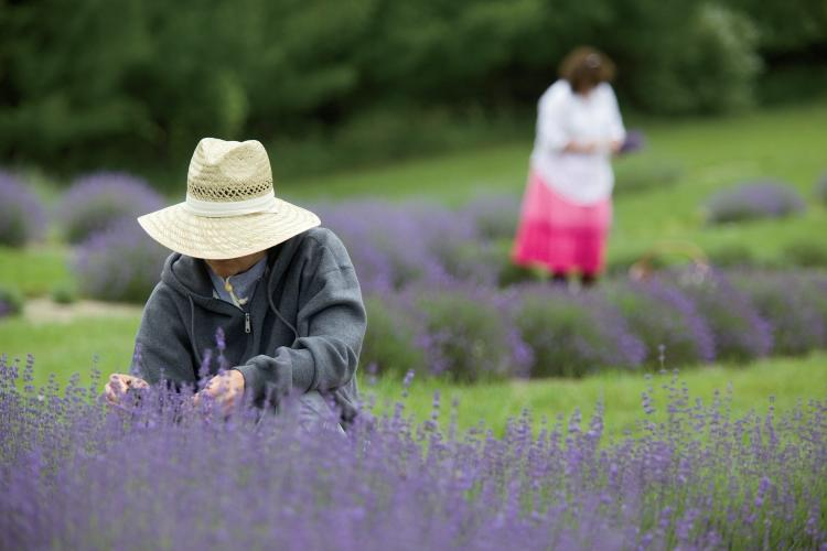 Lavender Lane farm in Noble County Indiana