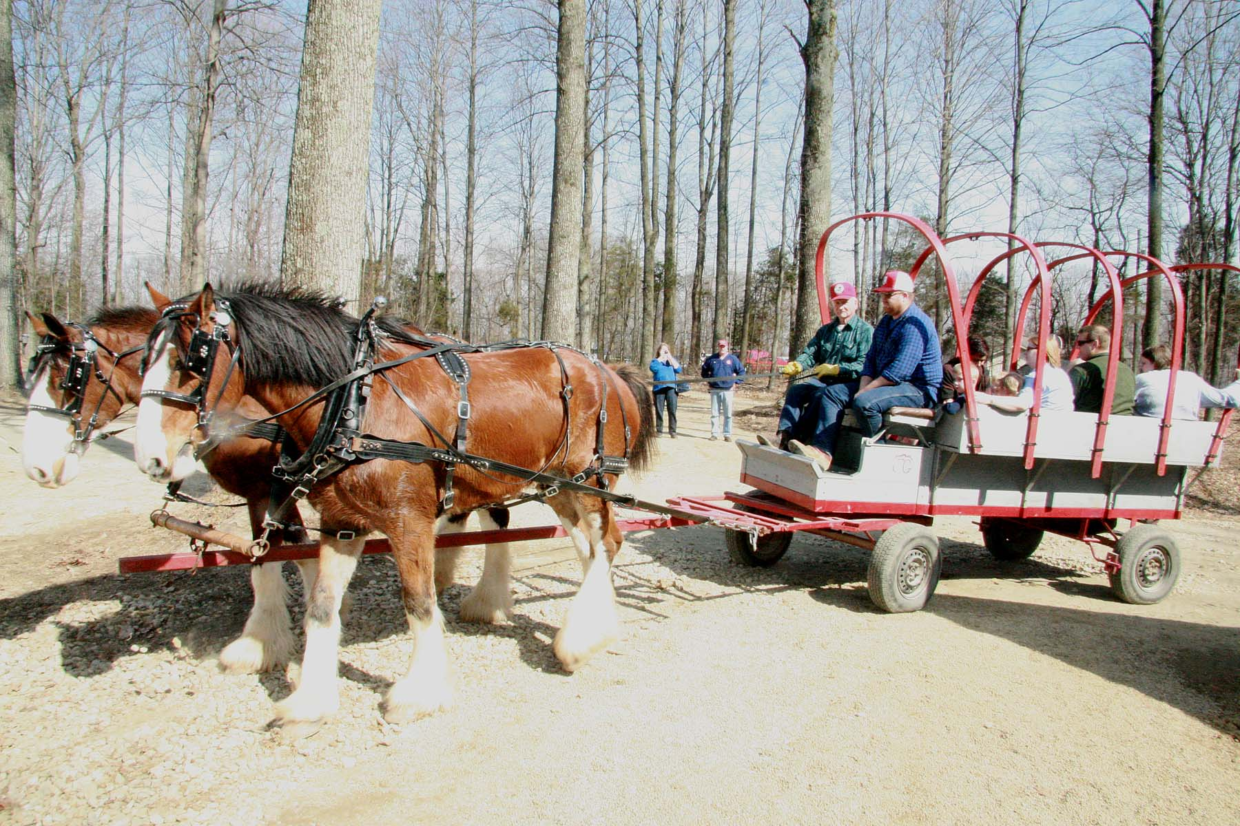 Horse Drawn Wagon1