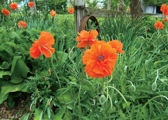 Perfect perennial plants for spring spring perennials mightylinksfo