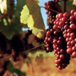 Warm Up This Winter on the Indiana Uplands Wine Trail