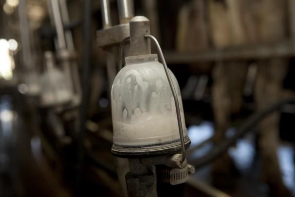 Milking parlor at Indiana dairy