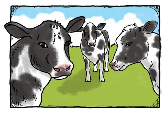 Indiana dairy cows art