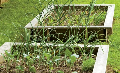 A urban back yard with raised beds growing vegetables.