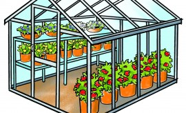 greenhouse_ks