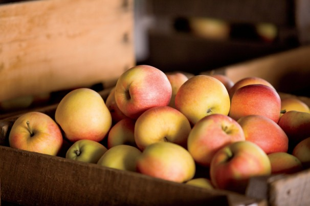 Stuckey Orchard