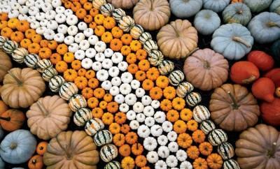 Pumpkins Harvest Display