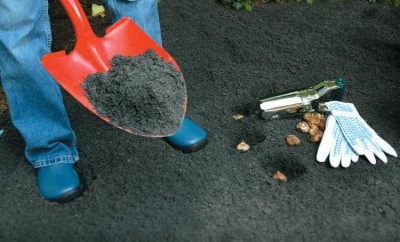 Planting bulbs to prepare for spring