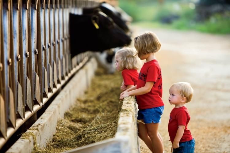 Kelsay Farms in Whiteland, Indiana