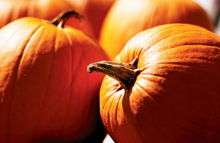 pumpkins for carving into jack-o-lanters