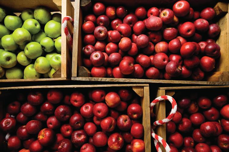 Apple recipes for tailgating