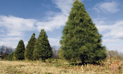 Top trees for the holidays