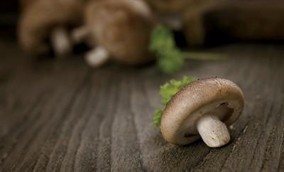 Indiana mushrooms